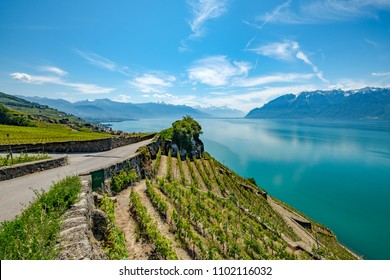 Lavaux Vineyard, a UNESCO World Heritage site. View on the terrasses and Lake Geneva (Lac Leman) in Switzerland