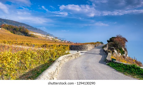 The Lavaux vineyards in autumn colors, a UNESCO World Heritage site. View on the wine terrasses near Montreux and Lake Geneva (Lac Leman) in Switzerland