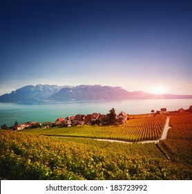 Lavaux vineyards in dusk, Geneva Lake and Swiss Alps in the background