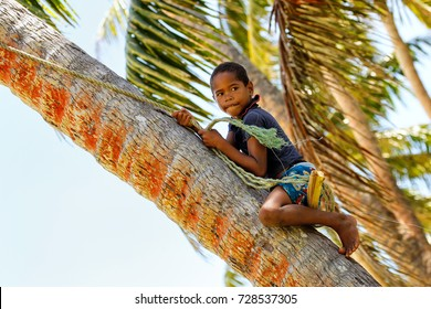 LAVENA, FIJI - NOVEMBER 27: Unidentified boy climbs the tree to swing on a rope swing on November 27, 2013 in Lavena village on Teveuni island, Fiji. Taveuni is the third largest island in Fiji.