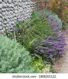 Lavender in an arid garden growing next to a dry flint stone wall.