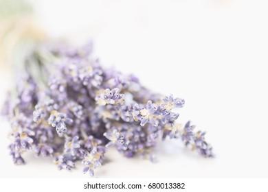 Lavender branch close-up. Selective focus. Blur. Aromatherapy, light blue and violet tones.
