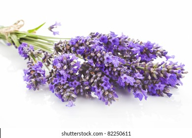 Lavender bunch close up isolated on white background. Aromatic herbs concept.