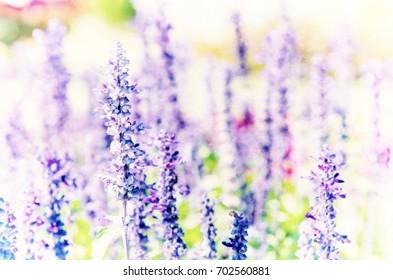 Lavender Bunch Flower watercolour painting.