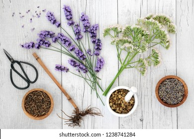 Lavender, chamomile and valerian herbs & essential oil bottle on rustic wood background. Used in alternative & traditional herbal medicine to improve mood, reduce stress, help depression & insomnia.