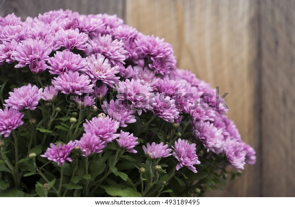 Lavender Colored Flowers Against a Rustic Wooden Fence