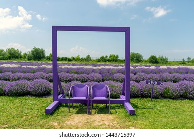 Chair in the Lavender Farm Images, Stock Photos & Vectors