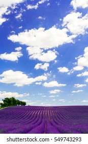Lavender field and blue sky
