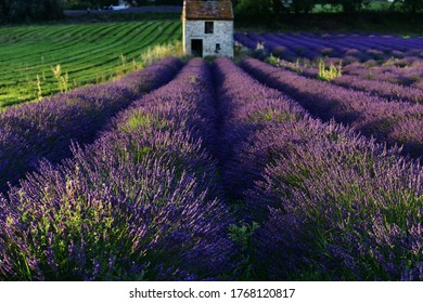 Lavender field during sunset with an old stone shed on the background. France 2020.