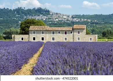 Lavender field with farmhouse in South of France