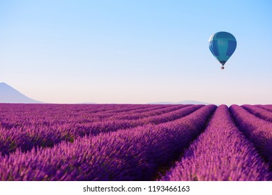 Lavender field and hot air balloon