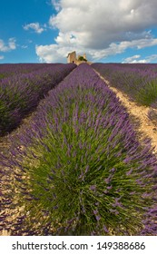 Lavender field with house ruins in Provence, France.