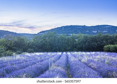 A lavender field in the Luberon, Provence.