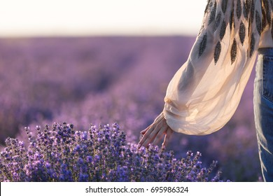 Lavender field. Midsection of a girl