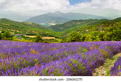 Lavender field on the background of mountains