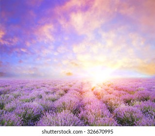 Lavender field over sunser sky. Beautiful image of lavender field over summer sunset landscape. Lavender flower field, image for natural background.