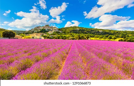 Lavender field and Simiane la Rotonde village. Provence, France, Europe