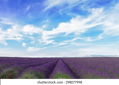 Lavender field with summer blue sky and clouds, France