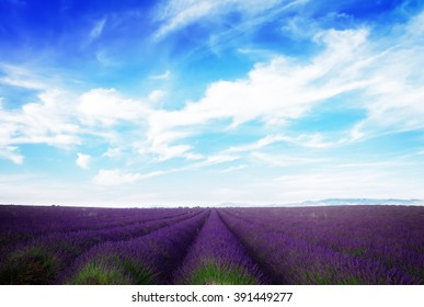 Lavender field with summer blue sky and clouds, France, retro toned