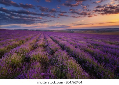 Lavender field under blue sky with clouds on sunset