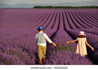 In a lavender field, Valensole, Provemce, France