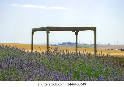 Lavender field in village. Lavender flowers on farm. Selective focus image. Pastoral landscape. Lavender fields in suburb of Istanbul.