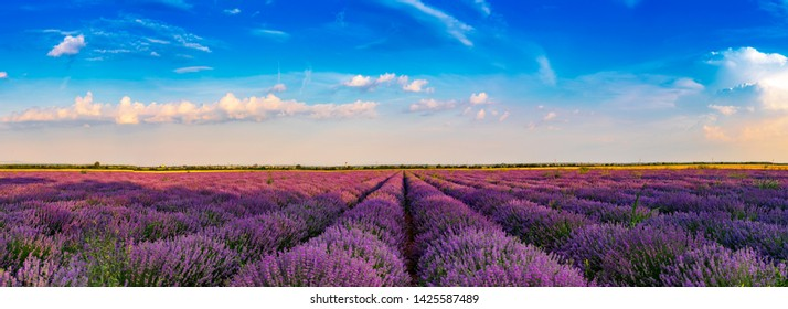 Lavender fields from the beautiful Bulgaria