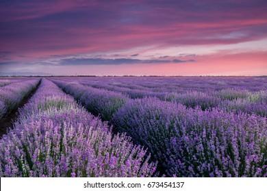 Fleurs Mauve-clair Images, Stock Photos & Vectors | Shutterstock