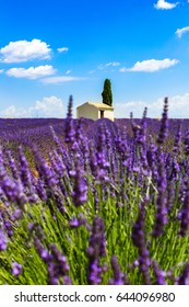 Lavender Fields with cottage