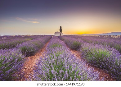 Lavender fields in Provence, Southern France