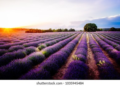 Lavender fields. Summer sunset landscape in Brihuega, Guadalajara