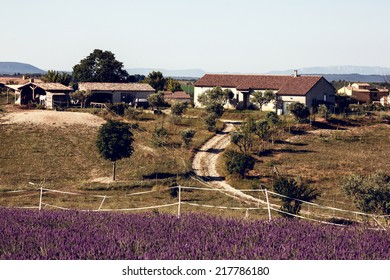 Lavender flower blooming fields. Landscape in Valensole plateau, Provence, France