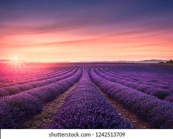 Lavender flower blooming scented fields in endless rows at sunset. Valensole plateau, provence, france, europe.