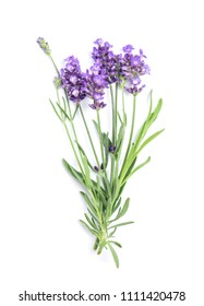 Lavender flower bunch isolated on white background. Fresh herbs