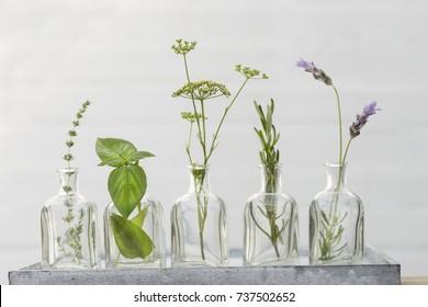 lavender flower, thyme, rosemary, basil,  parsley flower in bottles of  oil essence