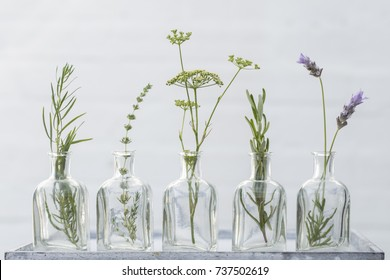 lavender flower, thyme, rosemary, parsley flower and estragon in bottles of  oil essence