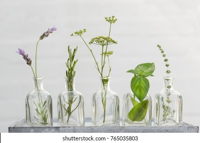 lavender flower, thyme, rosemary, parsley flower and basil in bottles of  oil essence in white wall