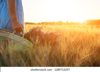 Lavender flowers in the basket at sunlight in a soft focus, pastel colors and blur background. Gold wheat field in Provence with place for text. Soft light effect. Warm vintage color. Ecological.