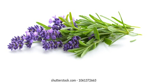 Lavender flowers bunch on a white background