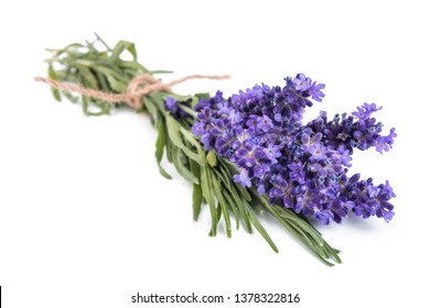 Lavender flowers bunch tied isolated on white background