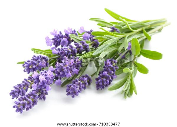 Lavendelblumen-Paket auf weißem Hintergrund