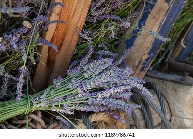 Lavender flowers captured on a lavender festival in south of France