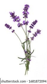 Lavender flowers close up isolated on white