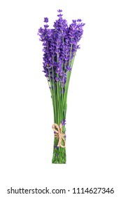 Lavender flowers in closeup. Bunch of lavender flowers isolated over white background.