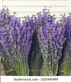Lavender flowers in closeup. Bunch of lavender flowers over white shutters.