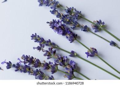 lavender flowers close-up. empty. purple flowers. Provencal lavender. flowers. background texture