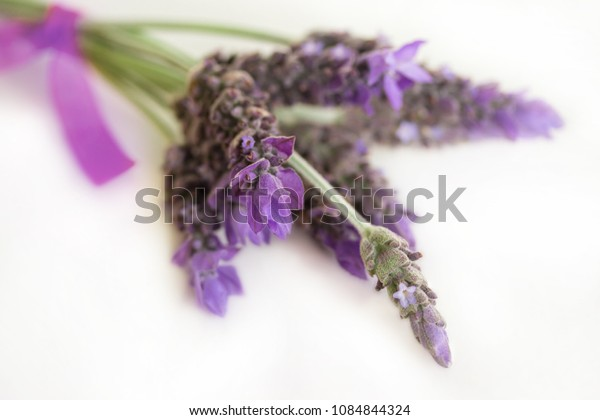Lavender flowers close-up on white