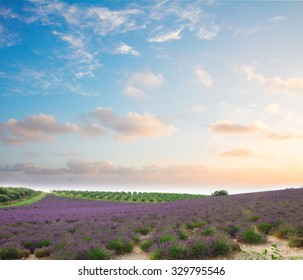 Lavender flowers field with summer blue and pink sunset sky, Provence, France
