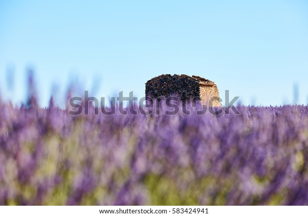 lavender flowers intentionally blurred in the foreground and an old ruin in the background