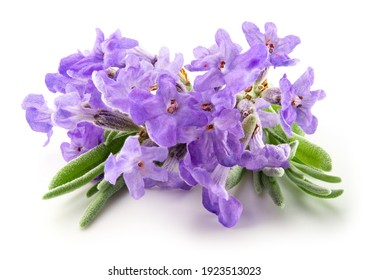 Lavender flowers isolated. Bunch of lavender flowers isolated over white background. Full depth of field.
